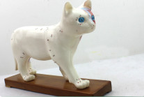 cat anatomical models cat acupuncture point model